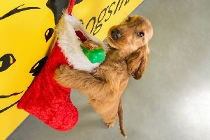 Dogs Trust Ballymena calls for donations for annual Christmas Fair