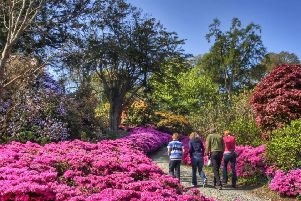 The world famous Mount Congreve Gardens reopen to the public this Saturday, February 28, 2019