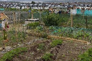 The new allotments will be located in the Derrycoole Way area of Rathcoole.