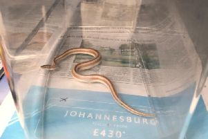 It is believed the snake may have travelled up the water pipes of the Mr Holmes house in Glebeland Gardens.