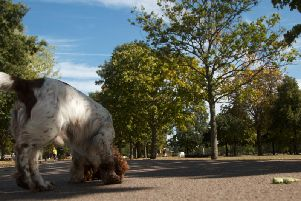 Aylesbury dog owners warned to be wary of deadly infection, 'lungworm'