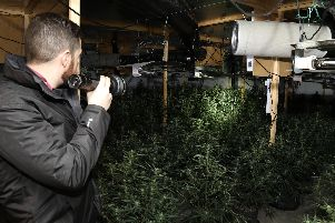 Officers discovered 1,000 cannabis plants