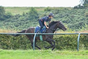 Dee Ex Bee at work at Mark Johnston's Middlesham gallops with a fortnight to go before Glorious Goodwood