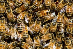 Falling insect numbers could cause a 'catastrophic collapse of natures ecosystems', according to Sussex academics