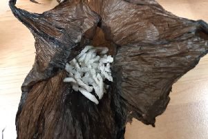 Drugs seized by police. Photo: Cambridgeshire police