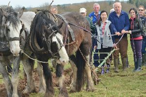 A new Connacht Horse Ploughing title will be on offer at the Co Roscommon Ploughing Championships on Sunday, April 7