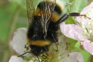You can join the Big Bee Count for Channel 4