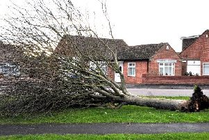 Fallen trees are a possibility due to the forecast high winds