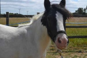 Rescued horse Ollie