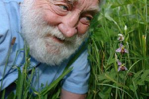 David and the Bee Orchid. Credit: Tony Margiocchi.