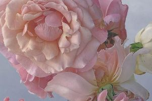 From Nick Knight's series 'Roses from my Garden'