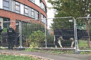 Cows on the 'mooove' at Portadown Health Centre.
