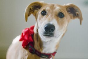 Dogs Trust film urges people not to buy a dog as a present this Christmas