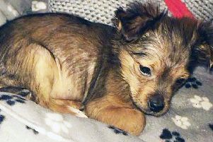 PACEMAKER BELFAST  07/02/2018'Sparky the Dog who died. Kyle Keegan  appeared at Craigavon Court on Wednesday, He is charged with causing unnecessary suffering to animals, It is  in relation to 11-week old puppy (Sparky) , who had been killed with a hammer in the Ailsbury Park area of Lurgan on Monday evening.'Photo Pacemaker Press