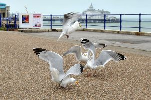 Seagulls on Eastbourne promenade. July 4th 2013 E27220P ENGSUS00120130407130042