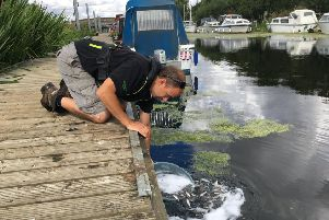 Environment Agency fisheries experts restocking the River Witham