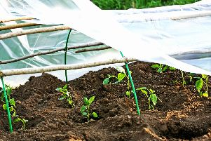 To start planting some seeds the greenhouse should be insulated, says Brian.