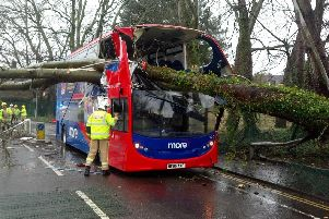 The bus was struck by a tree earlier this afternoon. Picture: Dorset Police