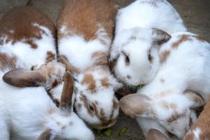 Eastbourne Rabbit Rescue SUS-190320-154419001