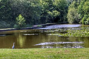 A typical beautiful Staunton County Park view. Picture: Graham May