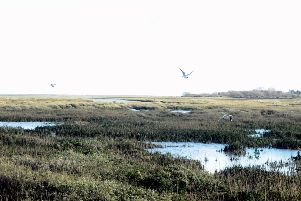 Sidlesham is known for its tidal mudflats, which attract thousands of birds. Picture: Kate Shemilt KS190122-9
