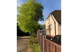 The trees outside Mr Lock's home, which have been cut down by the council. Picture: Trevor Lock