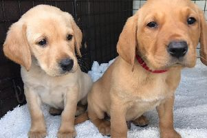 Puppies like Quaver and Quest need foster mums and dads