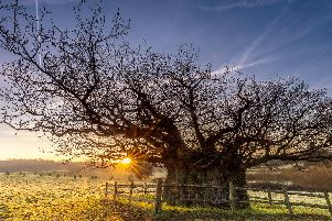 Explore Cowdrays Veteran Trees (credit, Cowdray Heritage Trust)