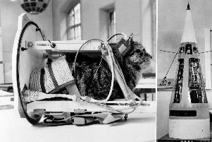 Photo taken on February 5, 1964 shows a cat representing the first cat that went into space, Felicette, with equipment in the rocket Veronique during an exhibition at National Conservatory of Arts and Crafts in Paris. Pic: AFP/Getty Images