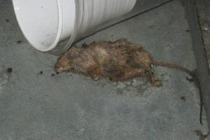 Dead mouse found beneath a drinks cooler