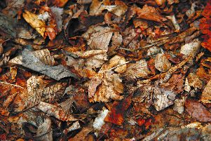 Turn these into valuable leaf mould which resembles a fruit cake.
