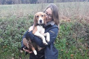 Buddy the beagle, pictured after being reunited with his owner Sarah Wilde. Picture: Tim Johnson