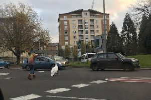Young lady stopping traffic to guide the swan to safety
