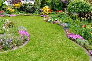 Brian has some great ideas to keep you busy in the garden.