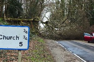 The tree on the road near Battle. Picture by Mick Bean SUS-200222-135245001