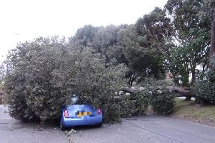 Fallen tree in Sea lane