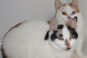 Worthing Cat Welfare Trust is looking for a new home for Isla and Ivy