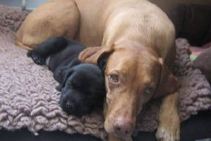 Daisy as a tiny puppy with big sister Mia