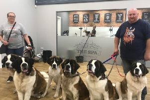 Six St Bernard dogs from Skegness joined Jollyes for their grand opening.