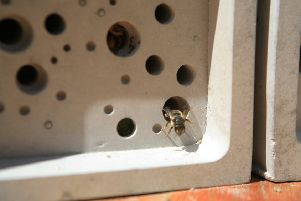 A Bee Brick with a tenant.