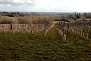 Beacon Down Vineyard has applied for a licence so it can sell alcohol on site