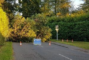 A fallen tree in Horsham earlier this year.