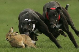 Hare coursing is predicted to increase in the coming months