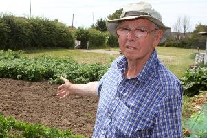 DM1971621a.jpg. Thieves steal vegetables from Bill Mason's allotment on Worthing Road in Littlehampton. Photo by Derek Martin Photography. SUS-190907-164537008