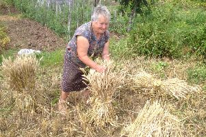 Maria on the allotment