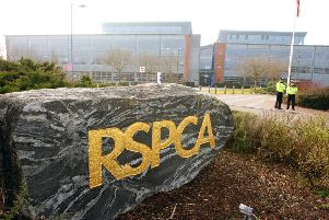 The RSPCA in Southwater. photo by derek martin ENGSUS00120120203161217