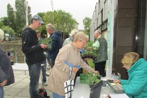 Snapping up bargains at last year's plant sale, organised by Shoreham Horticultural and Allotment Society. Picture: Barry Hillman