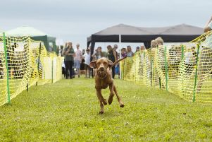 Dogs Trust Shoreham is holding its annual fun day on Sunday, May 26