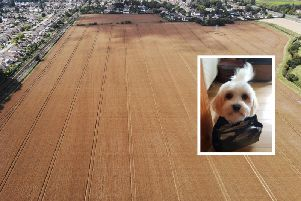 Pebbles the dog, and inset, the fields in Goring which were searched