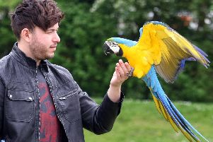 Curtis Fullman and his parrot Rhaegar. Picture: Derek Martin
